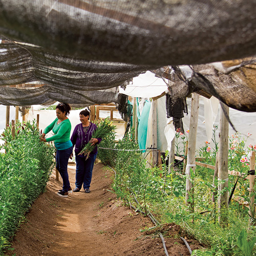 Management and Performance in Relationships with Communities